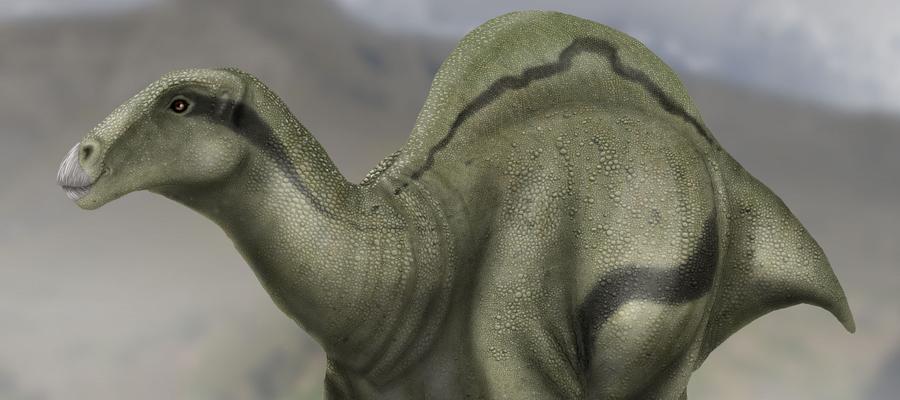 elsports_quehacer_cultura-patrimonio_dinosaurios_morella_02